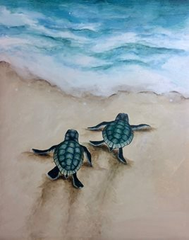 Image result for baby sea turtle
